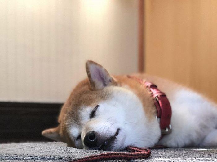 犬の留守番時の電気