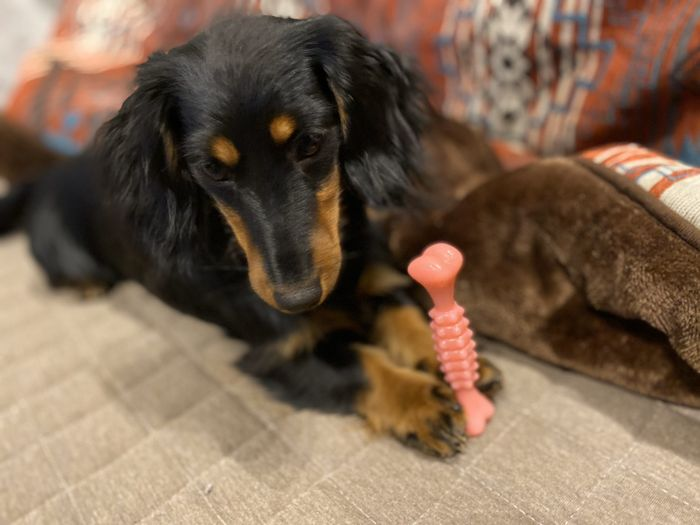 おもちゃを取り上げると唸る犬