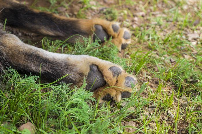 犬が草を食べても大丈夫か?