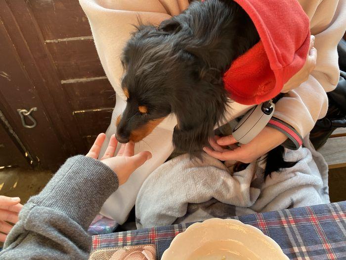 犬との食事