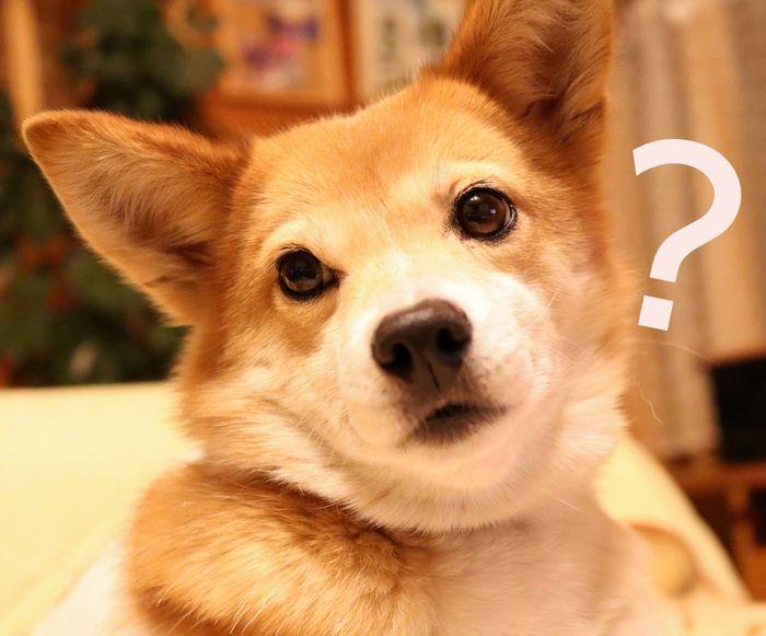 犬のストレスあくび