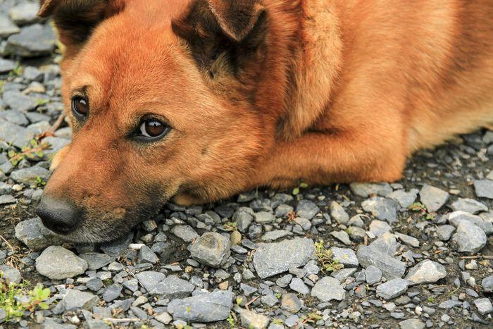 犬から嫌われやすいタイプ