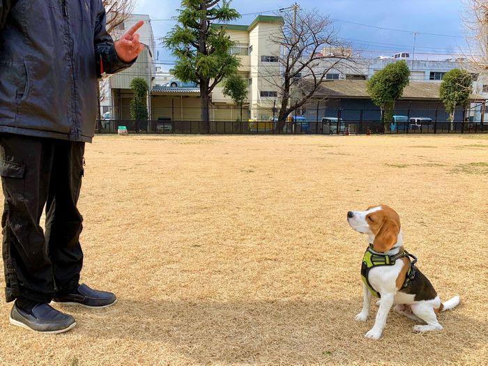 訓練士とドッグトレーナー