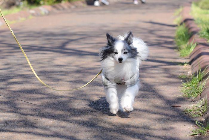 オスは散歩好き