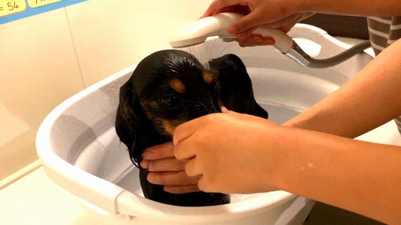 犬のシャワー
